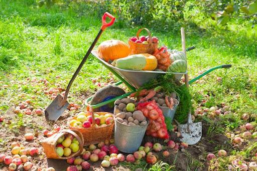 Лето, прощай! Календарь садовода на сентябрь