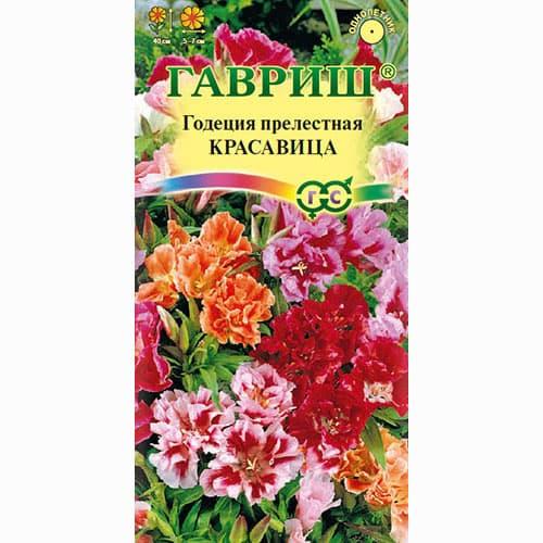 Годеция Красавица, смесь окрасок Гавриш изображение 1 артикул 66062
