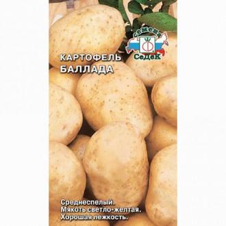 Картофель Баллада Седек изображение 4