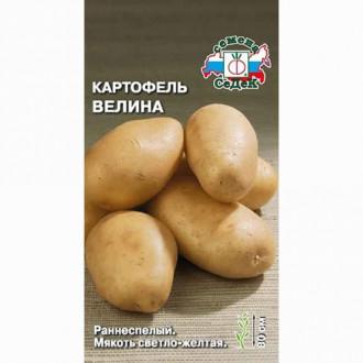 Картофель Велина Седек изображение 5