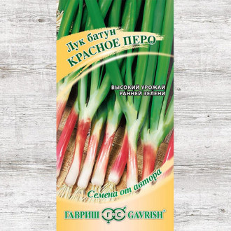 Лук на зелень Красное перо Гавриш изображение 3
