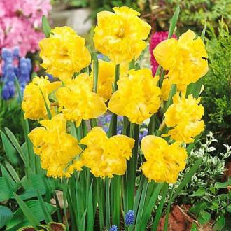 Нарцисс сплит-корона Флайер изображение 6