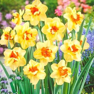 Нарцисс махровый Дабл Фэшн изображение 2