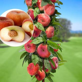 Персик колоновидный Инжирный изображение 1