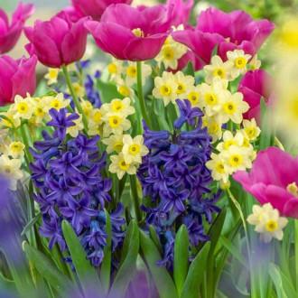 Суперпредложение! Комплект нарциссов, тюльпанов, гиацинтов из 20-ти луковиц изображение 7