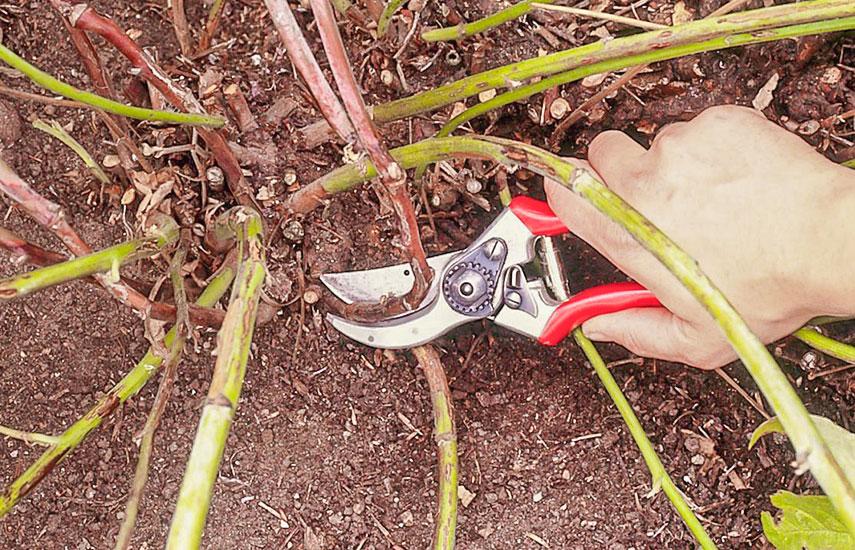 Подготовка малины к зимефото 3