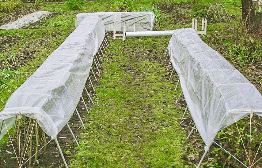Подготовка малины к зиме фото 1