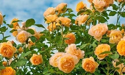 Садовые шедевры | Беккер