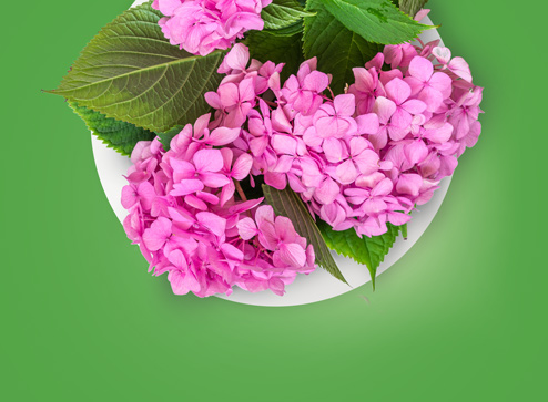 Каталог - -30% на декоративные растения - Беккер Россия