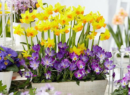 Каталог - -70% на яркие первоцветы - Беккер Россия